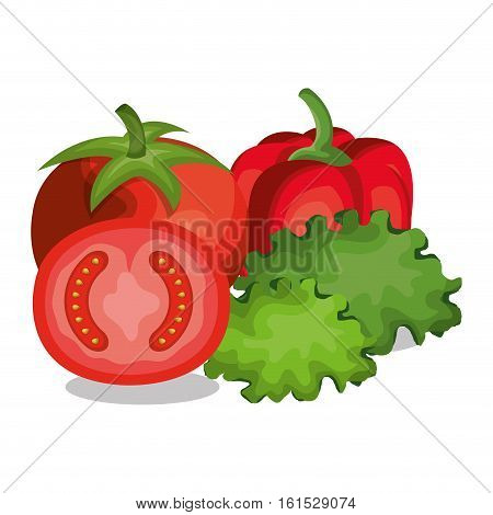 tomatoes and letuce fresh vector illustration design