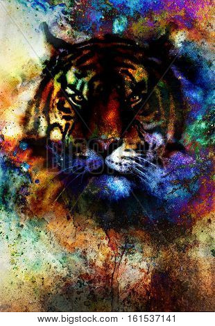 tiger collage on color abstract background, rust structure, wildlife animals, eye contact