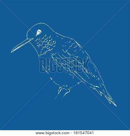 Hummingbird isolated on a dark blue background. Bird sketch.  Vector drawing of colibri for greeting cards, invitations, prints, web projects. Hand drawn illustration.