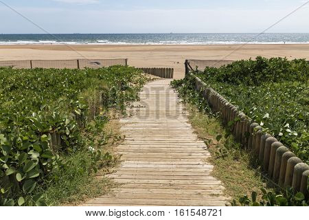 Wooden Walkway Green Dune Vegetation And  Beach