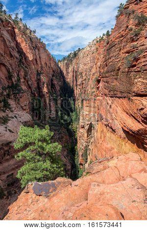 Vertical Zion National Park Landscape