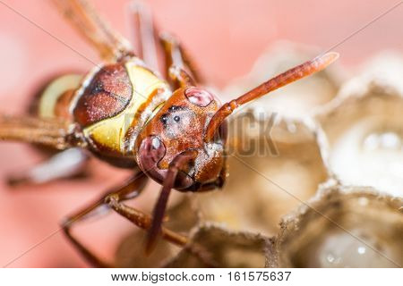 A study on wasp and thier activities