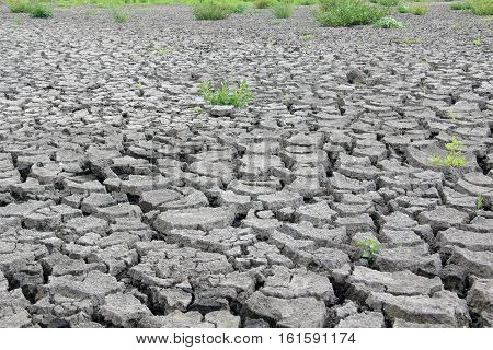 Drought cracked river bed. Climate change concept.