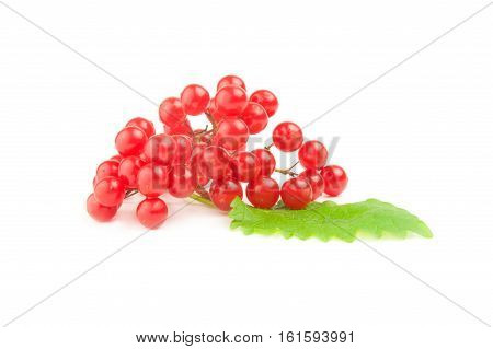 Viburnum berries isolated on a white background cutout