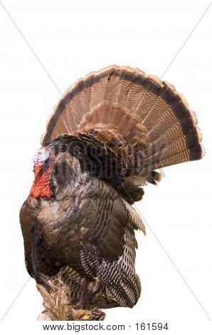 Wild Eastern Turkey 2
