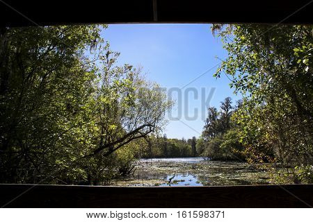 Image of a River View in Florida