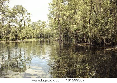 Image of a Florida Swamp with Foliage