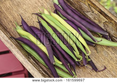 Image of Harvested Colorful Mixed String Beans