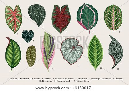 Set leaves. Exotics. Vintage vector botanical illustration. Colorful.