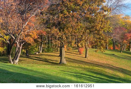 marthaler park autumn with colorful leaves on trees and fallen on grassy hilltop in west st paul minnesota
