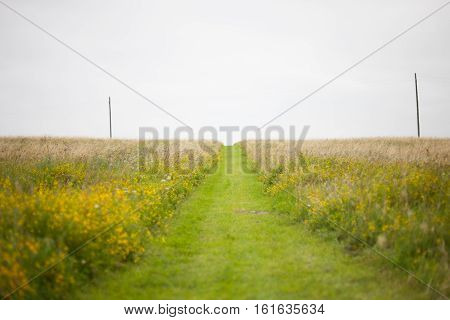 Grass path mowed through the meadow filled with flowers heading uphill