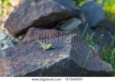 frog; nature; background; grass; animal; wild; wildlife; amphibian; brown; common; green; rana; summer; natural; spring; macro; outdoor; life; detail; garden; wet; eye; species; habitat; slimy