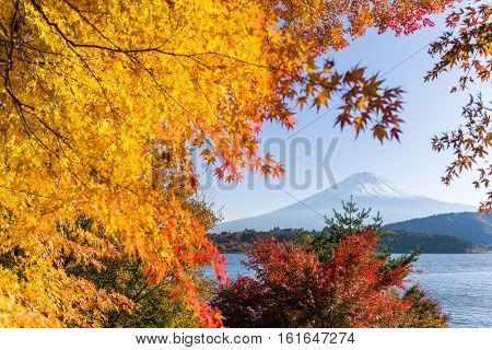 Mt.Fuji in autumn at Lake kawaguchiko in japan