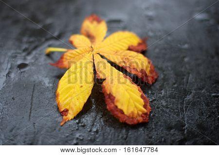 Yellow Leaf On Slate