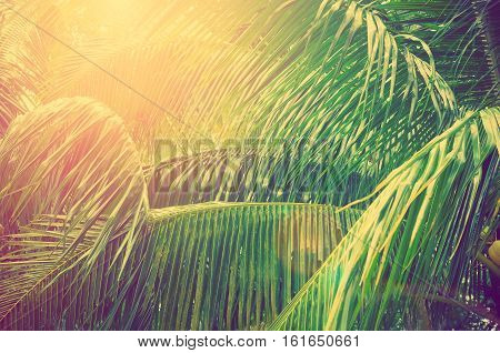 Tropical Palm Leaf With Sun Light On Sky Background.