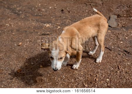 Sad lonesome stray dog is staying in mud