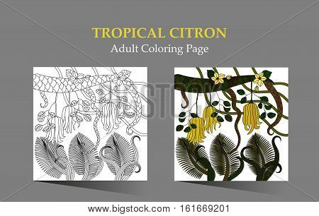 Adult antistress coloring page. Patterns with tropical plants, flowers and citron Buddha s hand . Vector illustration.