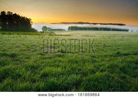 thick morning fog in the summer forest. Morning landscape in summer thick fog. dense fog in the morning. early morning. forest hiding in the fog.