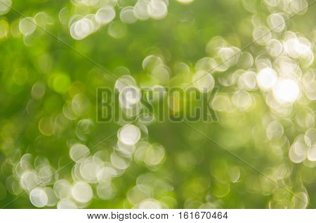Nature Green Bokeh Sun Light