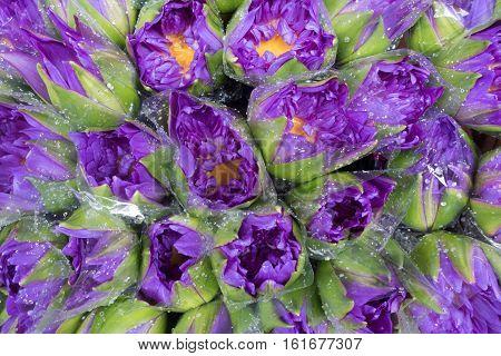 Violet lotus wrapped with plastic for sale at Pak Khlong Talat Bangkok's largest flower market
