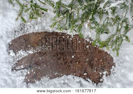 Christmas tree on a wooden board with snow, green framework with snow, postcard background