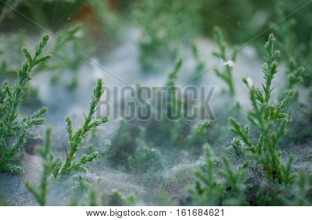 Cobwebs on the grass with dew drops - selective focus, water drops on web in forest