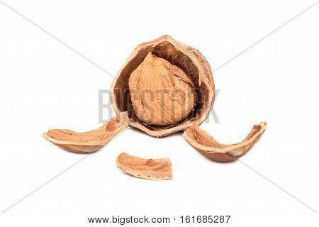 Splintered Hazelnuts