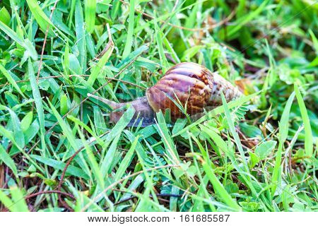 Close up of real snails on top of green grass