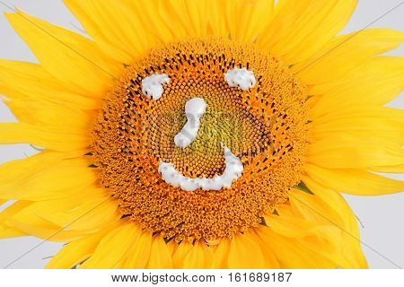 Smiling sunflower isolated on a white background