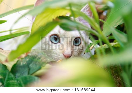 the cat hid in the foliage and watch