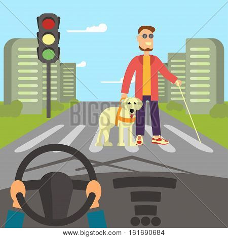 A blind man with guide dog and walking stick is crossing street. Human hands driving a car on asphalt road with disability person walking on the crosswalk, car interior, flat design vector illustration.