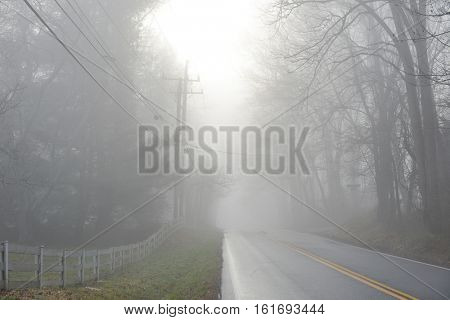 Foggy road into the winter forest