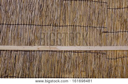 Texture Of The Dry Reeds
