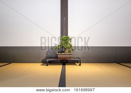 A small bonsai tree on a japanese tatami