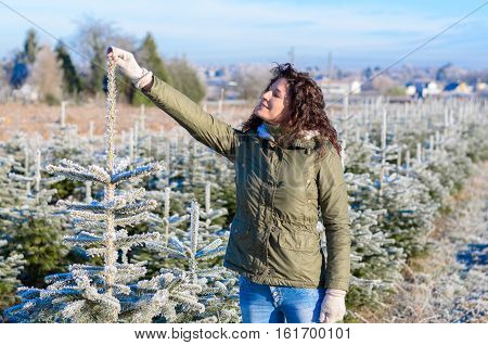 Happy Young Woman Choosing A Christmas Tree
