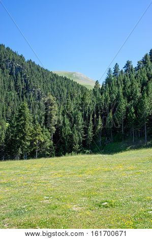 Landscape of the forest in Pyrenees mountains with the green meadow on a summer day, Pyrenees, Girona, Alp, Catalonia, Spain