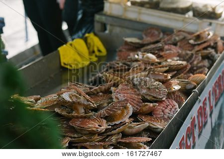 Fresh Scallops Seafood Assortment At The  Fish Market. Toned