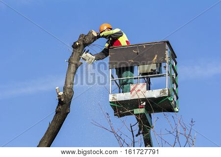 Worker with a chainsaw trimming the tree branches on the city park