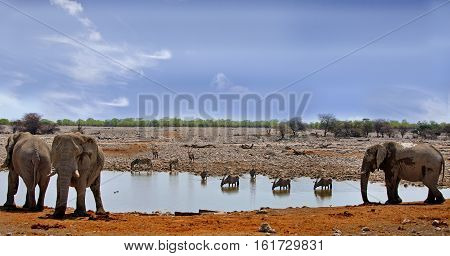 Panorama view of a waterhole in Etposha National Park, Namibia, Southern Africa
