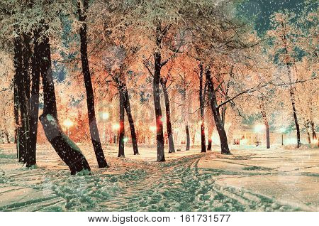 Winter night landscape - winter night park with falling winter snowflakes. Colorful winter scene of snowy park by winter night. Winter background with Christmas and New Year winter  mood