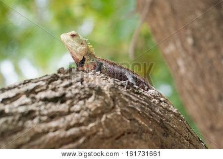 Reddish lizard resting on a tree branch