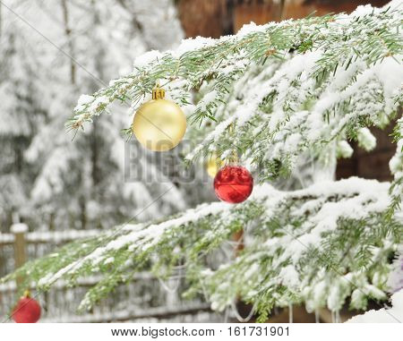 Branches Of Dressed Christmas Tree In Tranquil Winter Forest. Christmas Outdoor Background.