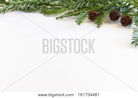 Coast Redwood (Sequoia sempervirens) needles and cones against a white background