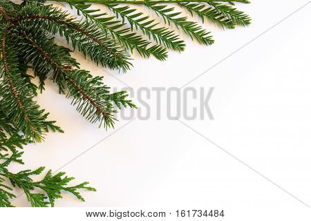 Evergreen conifer template with coast redwood (Sequoia sempervirens) Sitka spruce (Picea sitchensis) and incense cedar (Calocedrus decurrens)