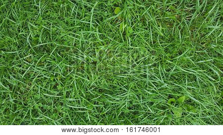 water droplets on green grass and clover