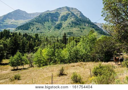 Meadow and forest with hills in Utah's Wasatch Range with two horses