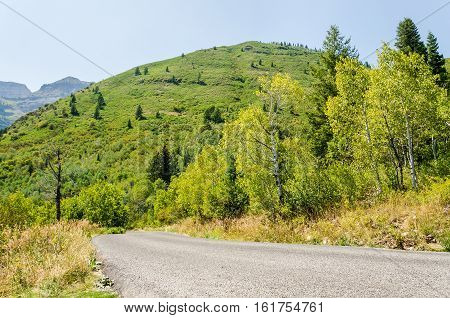 Road with forest and hills in Utah's Wasatch Range