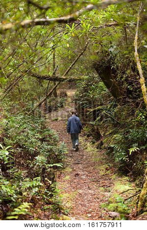 Young boy walks along a narrow dirt track in a native forest near Queenstown on the west coast of Tasmania Australia