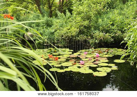 photograph of a pond of lily pads