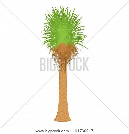 Coconut palm icon. Cartoon illustration of coconut palm vector icon for web